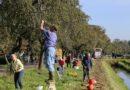 Veiling perenbomen en veiling van antiek en curiosa